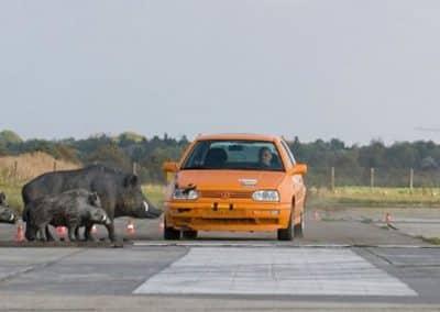 Σύγκρουση οχημάτων με ζώα